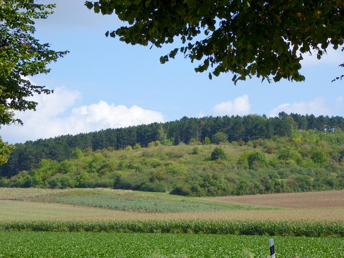 Offener Bereich des Grebenberges