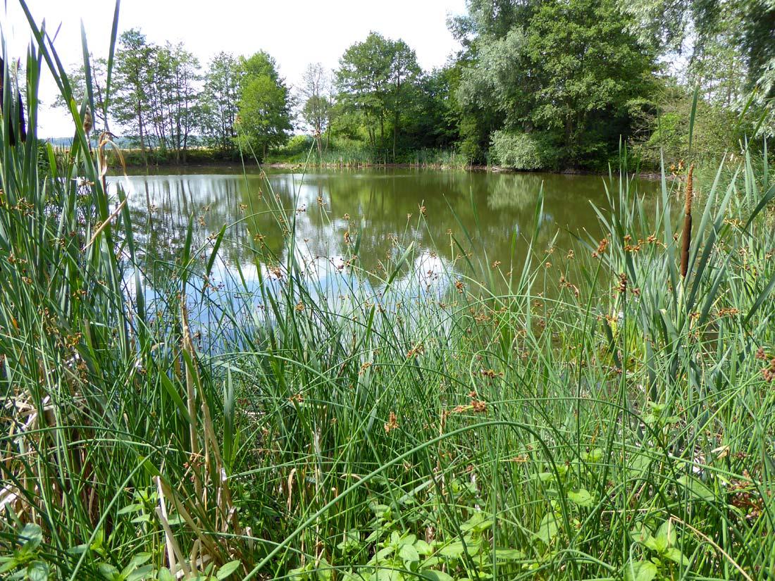 Stillgewässer als Ergebnis des ersten Kiesabbaus bei Angerstein