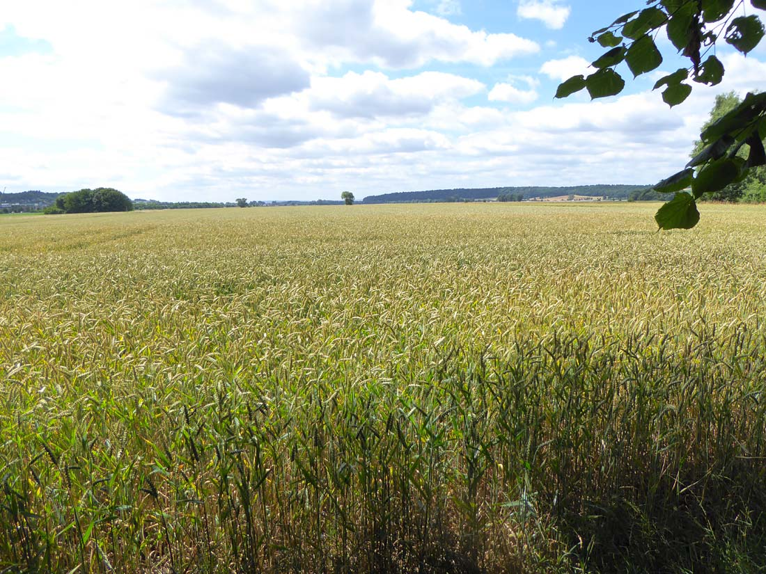 Landwirtschaftlich geprägte Große Masch