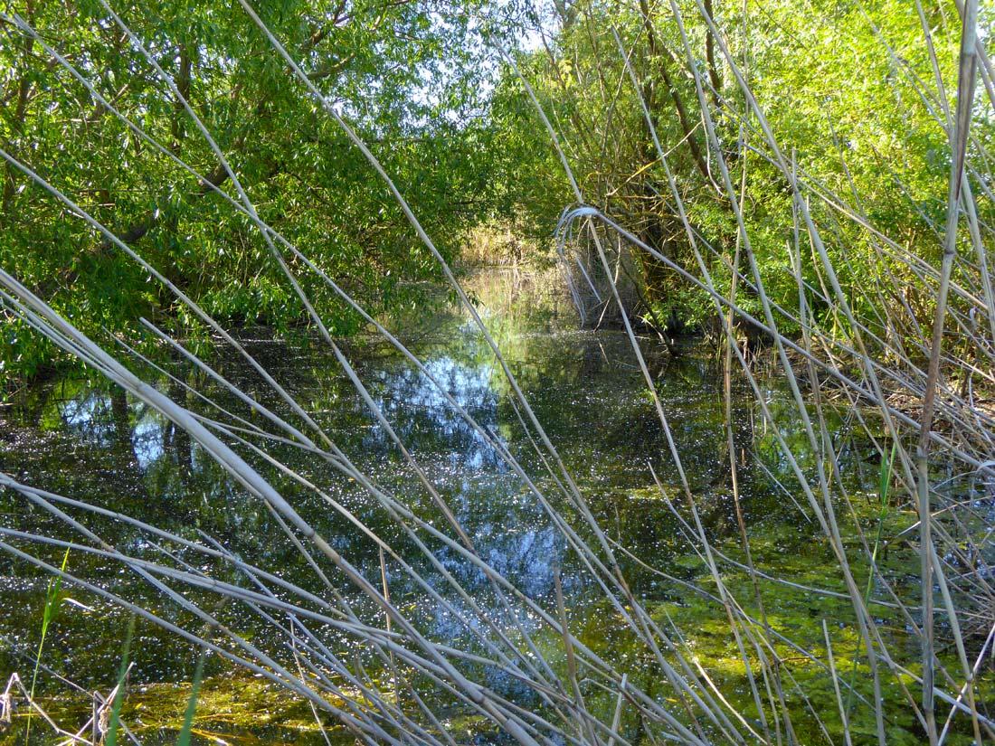Stillgewässer als wertvoller Lebensraum