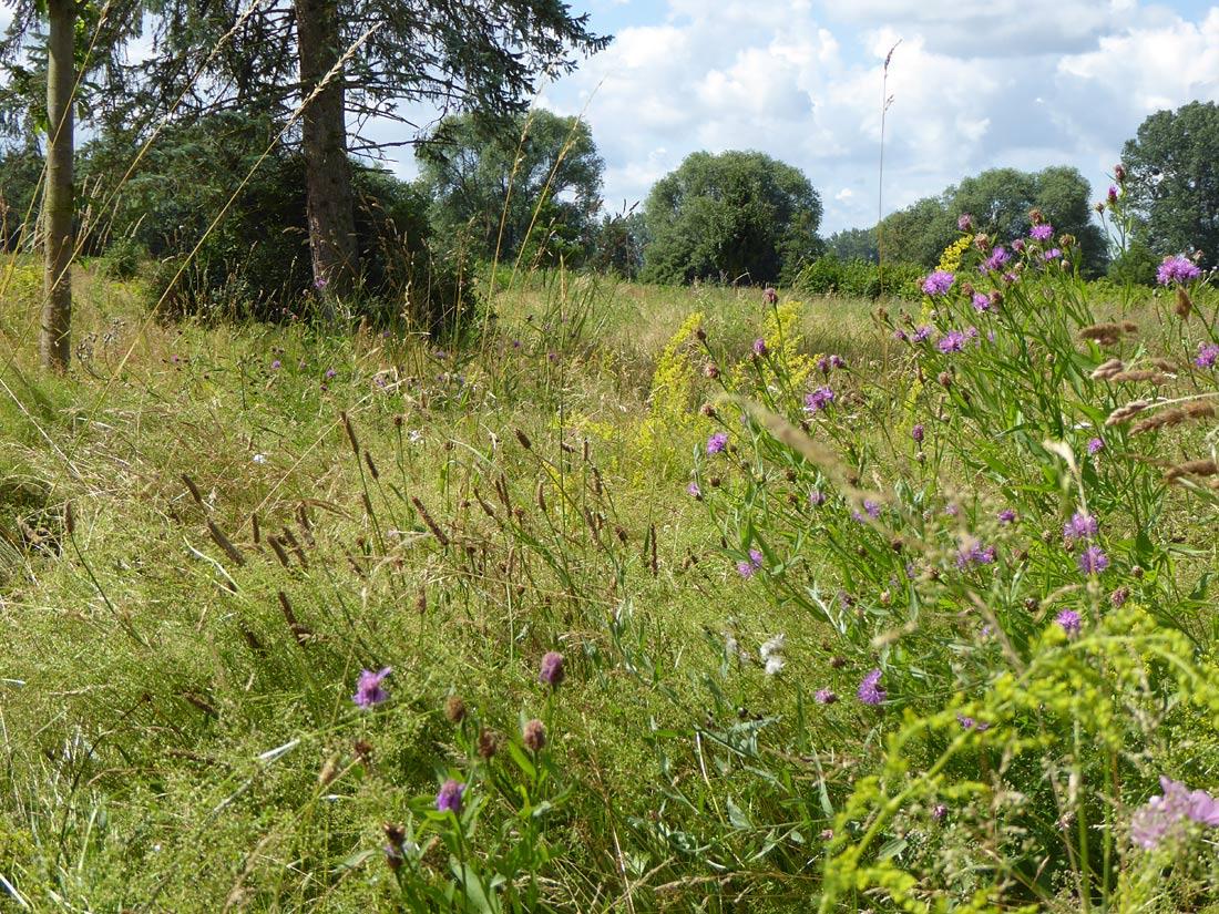 Blütenreiche Nahrungsflächen für Insekten südlich des Sees