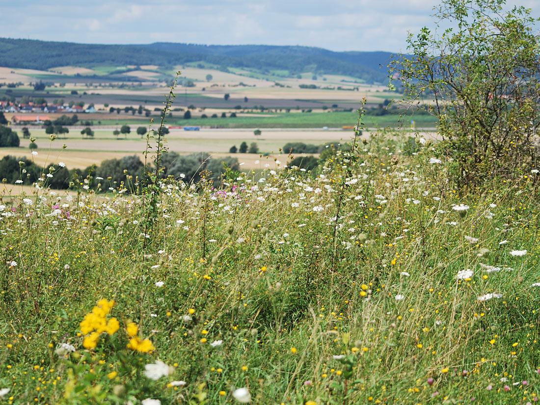 Blütenreiche Vegetation auf dem Grebenberg
